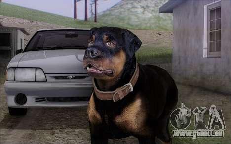 Rottweiler from GTA 5 für GTA San Andreas