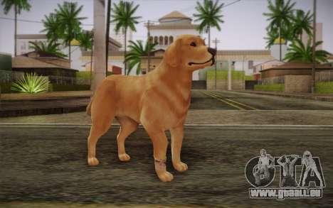 Rottweiler für GTA San Andreas